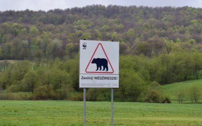 """""""Zwolnij, NIEDŹWIEDZIE!"""" :) Jak dojechać w Bieszczady i czym się tam przemieszczać?"""