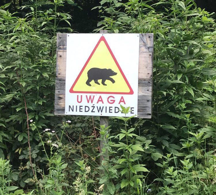 Czy w Bieszczadach można spotkać niedźwiedzia?