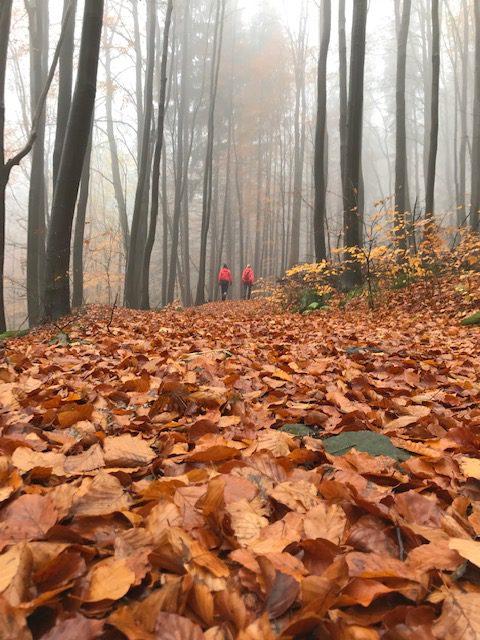 Góry Stołowe jesienią